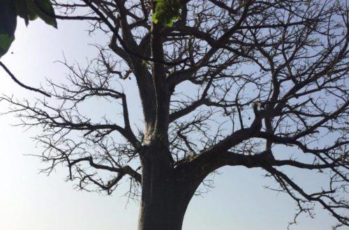 Article : Le  mont  Kolima : Une  porte  ouverte  sur le Fouta Djallon